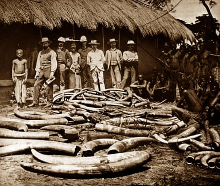 The Belgian Congo was a centre for ivory hunting.