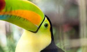 Rainforests help protect against global heating as well as being a vital habitat for critters, such as this gorgeous toucan, and forest-dwelling humans.