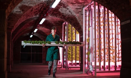 'This is the farming of the future': the rise of hydroponic food labs