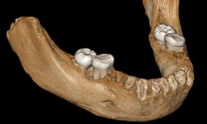 The Denisovan mandible likely represents the earliest hominin fossil on the Tibetan Plateau