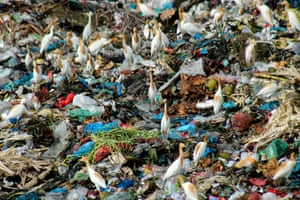 Birds scavenge at a landfill site in Aceh, Indonesia. Only 9% of all plastic waste ever produced has been recycled. About 12% has been incinerated, while the rest - 79% - has accumulated in landfills, dumps or the natural environment.