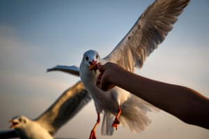 A seagull eats a piece of dried fish from a man's hand at the seaside resort of Bang Pu on the outskirts of Bangkok.