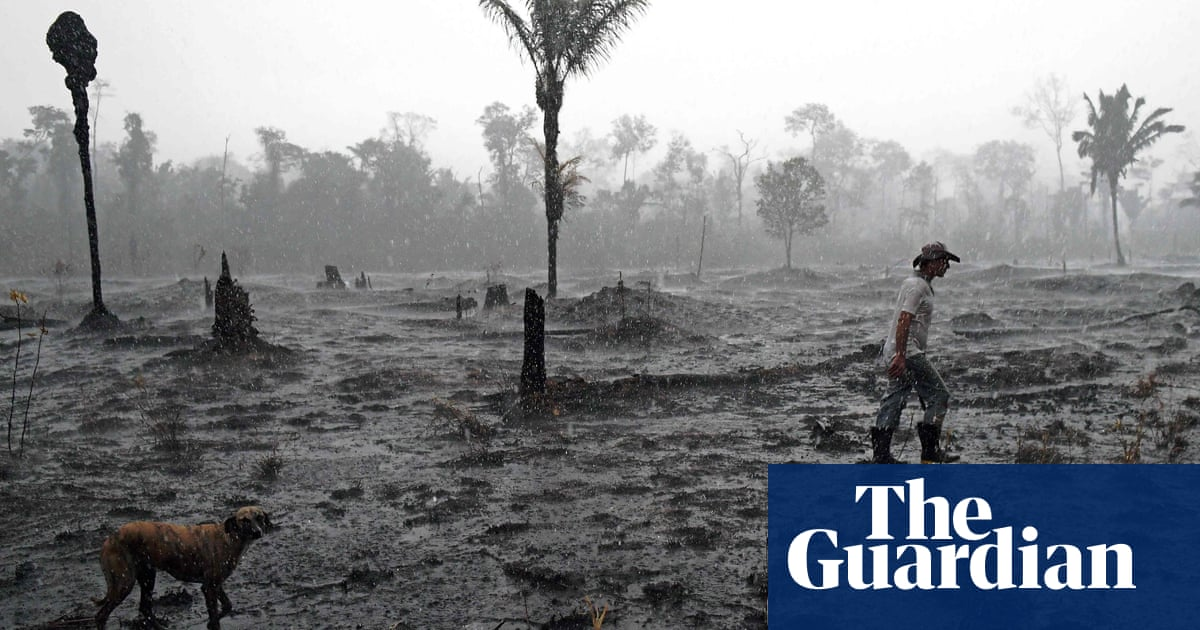 A fifth of Brazilian soy in Europe is result of deforestation
