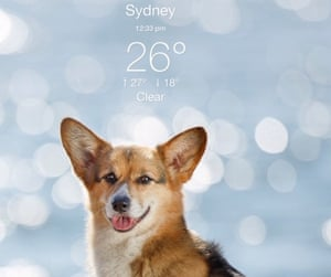 Weather Puppy app for First Dog cartoon
