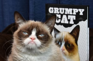 Grumpy Cat makes an appearance at Kitson Santa Monica to promote her new book.