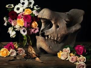 white rhino skull with flowers