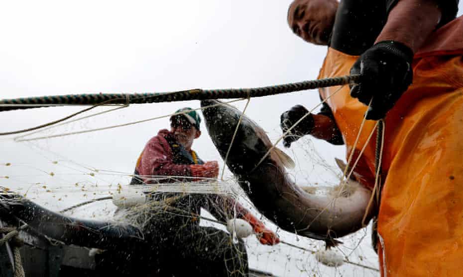 Salmon-fishing in Alaska.