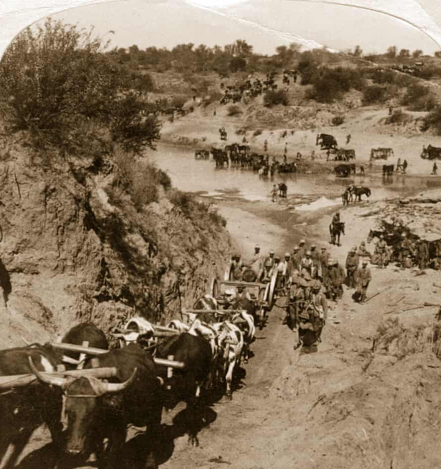 Buffalo and artillery cross the Zand river during the second Boer war.