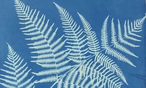 Featherly outlines … Atkins's cyanotype of the eagle fern.