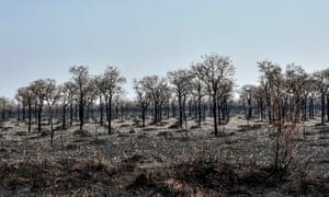 Forest fires have raged in the Bolivian Amazon for two months, doing damage to huge swathes of land, including in Otuquis National Park, in the Pantanal ecoregion of Bolivia.