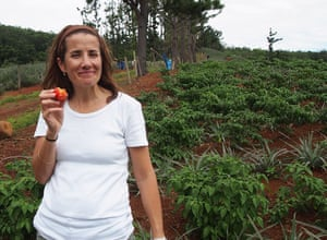 Researcher Tara McKenzie with a rejected tomato on a Bundaberg farm