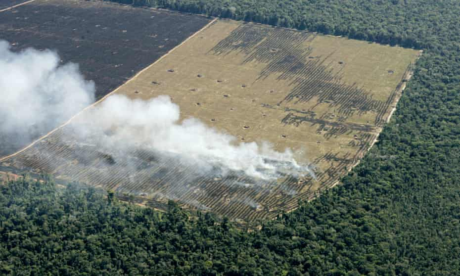 Hundreds of hectares of former Amazon jungle destroyed by loggers and farmers lie next to virgin rainforest in Mato Grosso State, Brazil