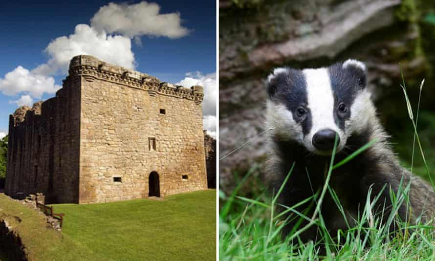 Craignethan Castle and a not particularly angry looking young badger.