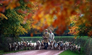 Hounds are exercised in Cheshire