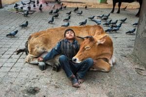 Boy rests against a cow, Kathmandu, Nepal, 2013