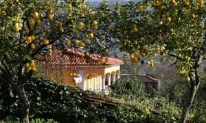Orange trees in the garden at Quinta da Malta, the start of Kevin's walk.