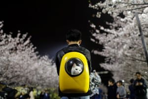 A man carries his pet cat as he walks under the cherry blossoms at Tongji University in Shangai.