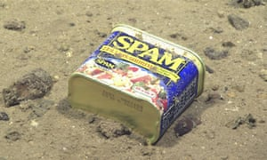 A container of Spam, seen resting at 4,947 meters on the slopes of a canyon leading to the Sirena Deep. 2016 Deepwater Exploration of the Marianas expedition