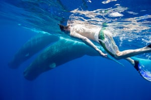 I spent last week on a six-metre fishing boat in the Indian Ocean off Kalpitiya, on the west coast of Sri Lanka with the photographer Andrew Sutton and the marine biologist Ranil Nanayakkara. Andrew and I were diving in a marine conservation area  I met a pair of young, sexually mature male sperm whales – cetacean teenagers.