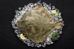 Turbot – 'The mucus is absolutely disgusting.'