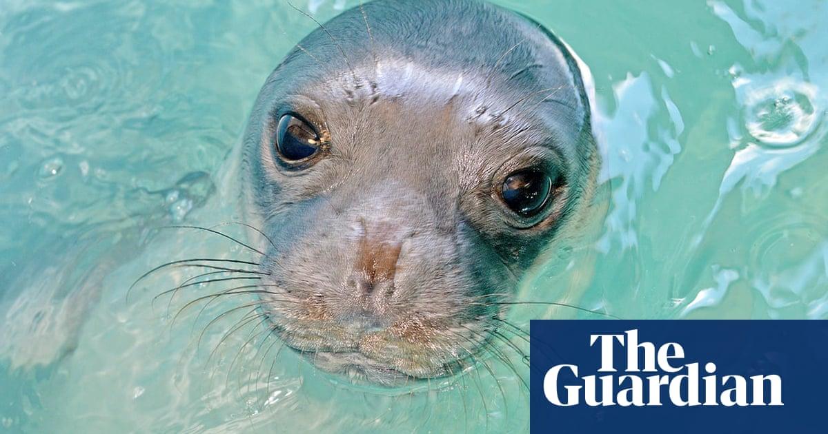 Kostis, beloved local monk seal, found slain in waters near Alonnisos, Greece