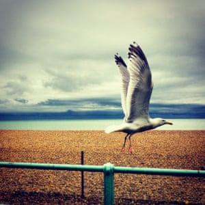 Seagull flying towards sea against dramatic background of orange gravel and blue/grey sky