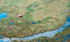 A plane flies over caribou in Alaska