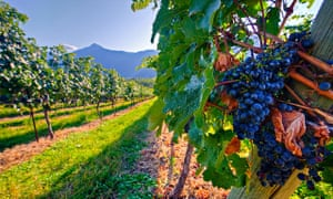 Tours of several vineyards are an attractive option.