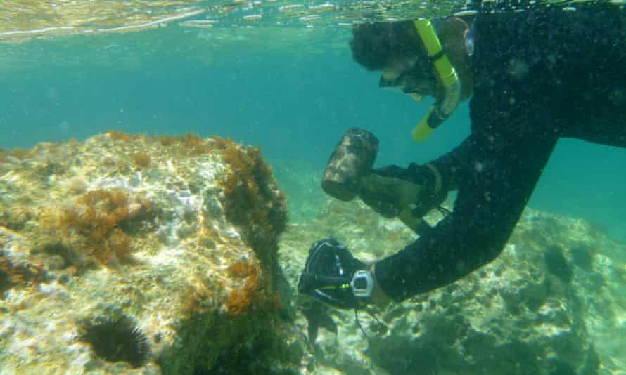 A diver illegally chiselling date shells from rocks off Albania, which banned the practice in 2014.