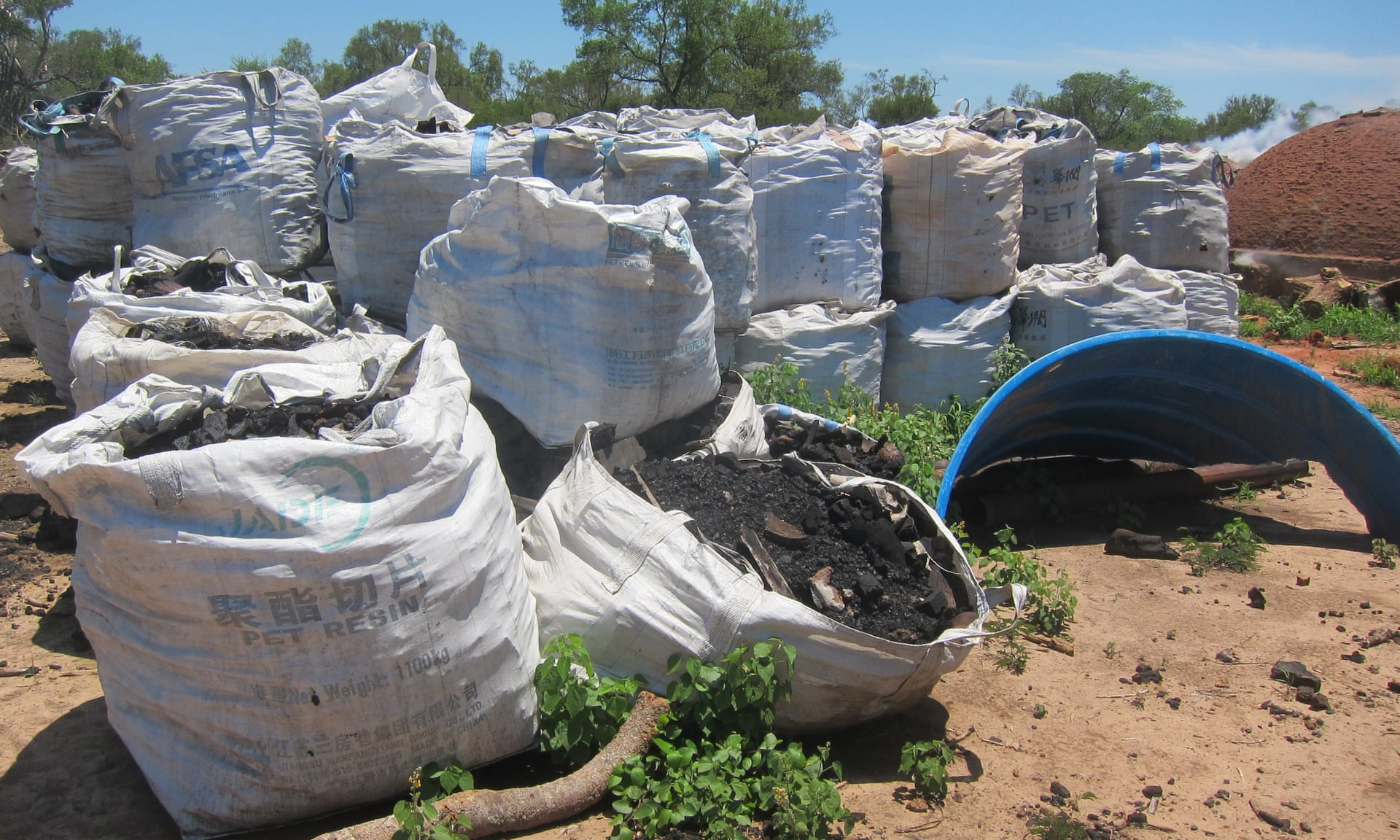 Bags of charcoal made from clearing Paraguay's Chaco forest. Photograph: Earthsight