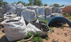 Bags of charcoal made from clearing Paraguay's Chaco forest.
