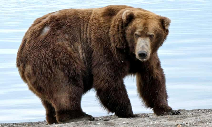 Bear number 747