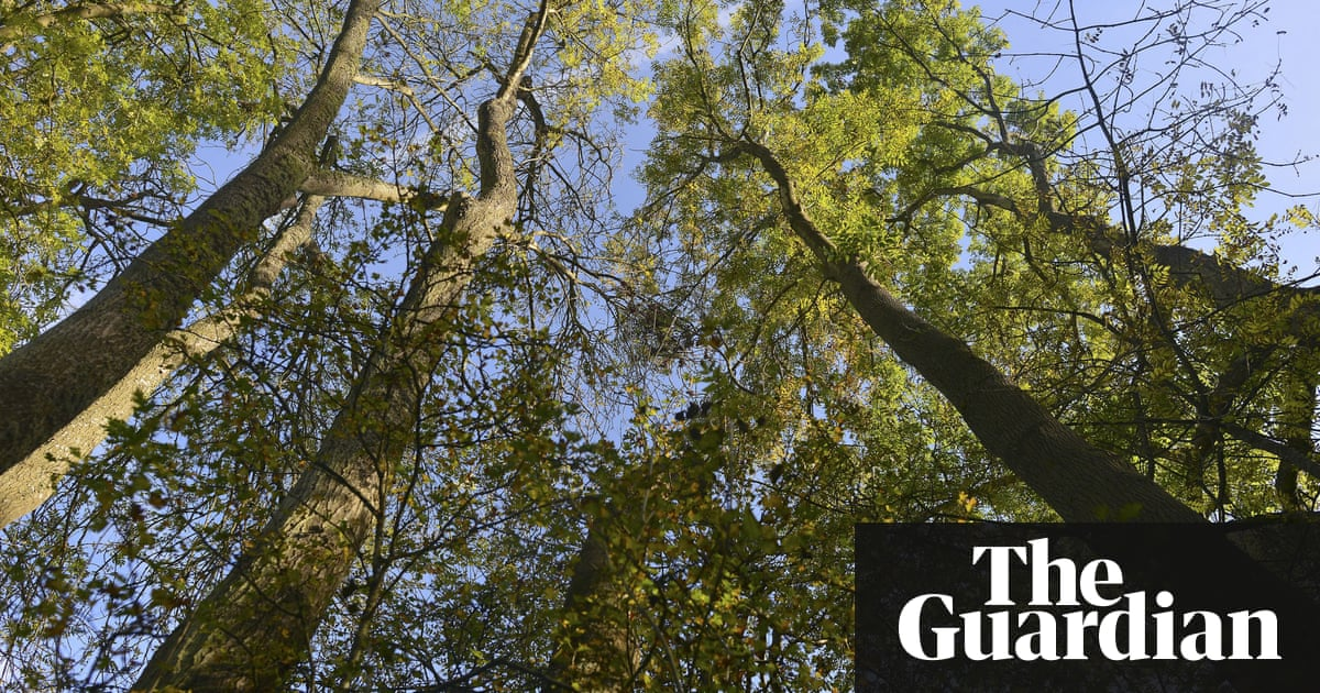 With 90% of the UK's ash trees about to be wiped out, could GM be the answer?