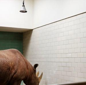 Rhinoceros and lamp