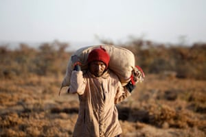A man carries a sack of locusts on his shoulder