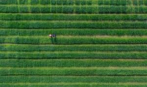 Yangzhou, China: Farmers work in a field in the province