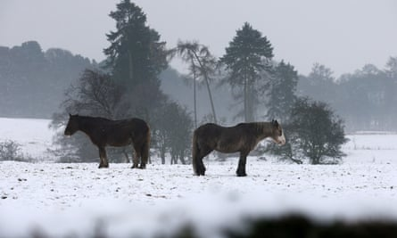 Horses in a field near Larbert, central Scotland