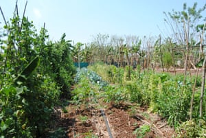 Fields contain a mixture of crops planted closely together.