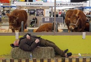 Paris, France: A farmer takes a nap at an annual agriculture fair