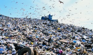 Massive rubbish dumps and sprawling landfills have led some birds to give up on migration.