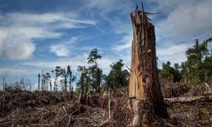 Land clearing for a palm oil plantation in Indonesia