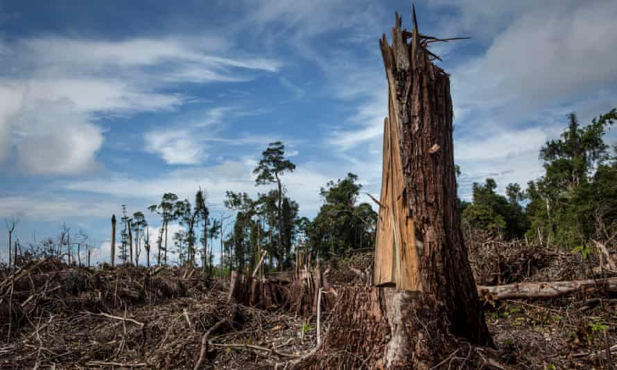 Land cleared for palm oil plantation
