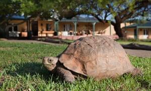 A leopard tortoise at Samara private game reserve.