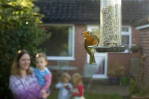 A family watches a robin on a birdfeeder in their garden in Cheshire