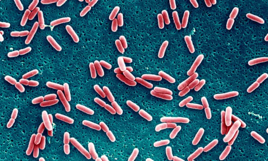 escherichia coli, the bacterium that was the focus of the mit/harvard project