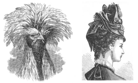 Polish fowl, from Variation of Animals and Plants under Domestication 1868, and modish woman's hat incorporating the plumage of a whole bird, Harper's Bazaar 1876.