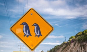 Penguins crossing sign near Blue Penguin colony in Oamaru, New Zealand