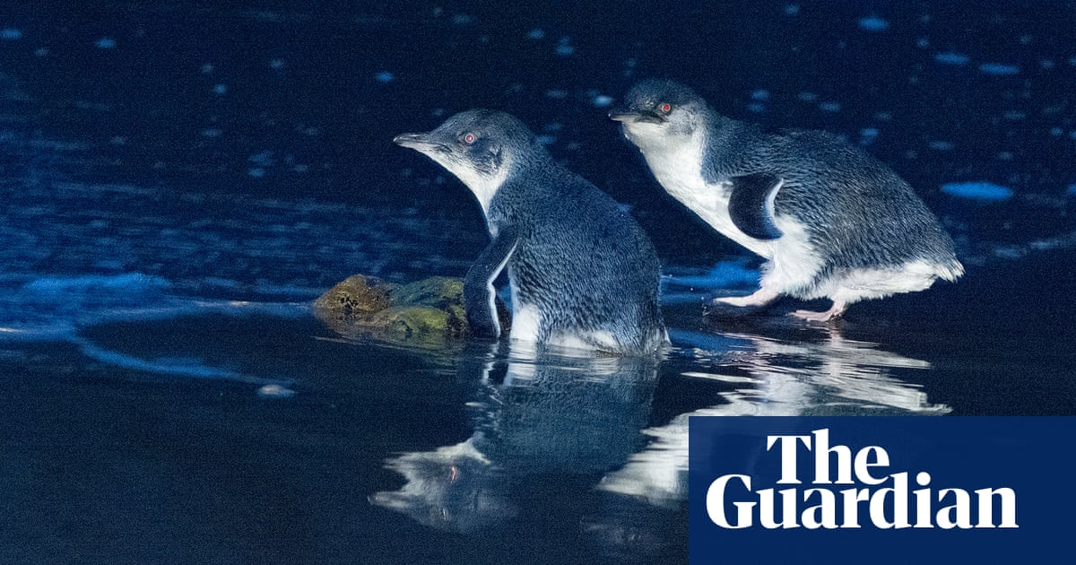 Tasmanian devils wipe out thousands of penguins on tiny Australian island