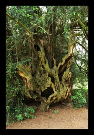 The Bettws Newydd Yew
