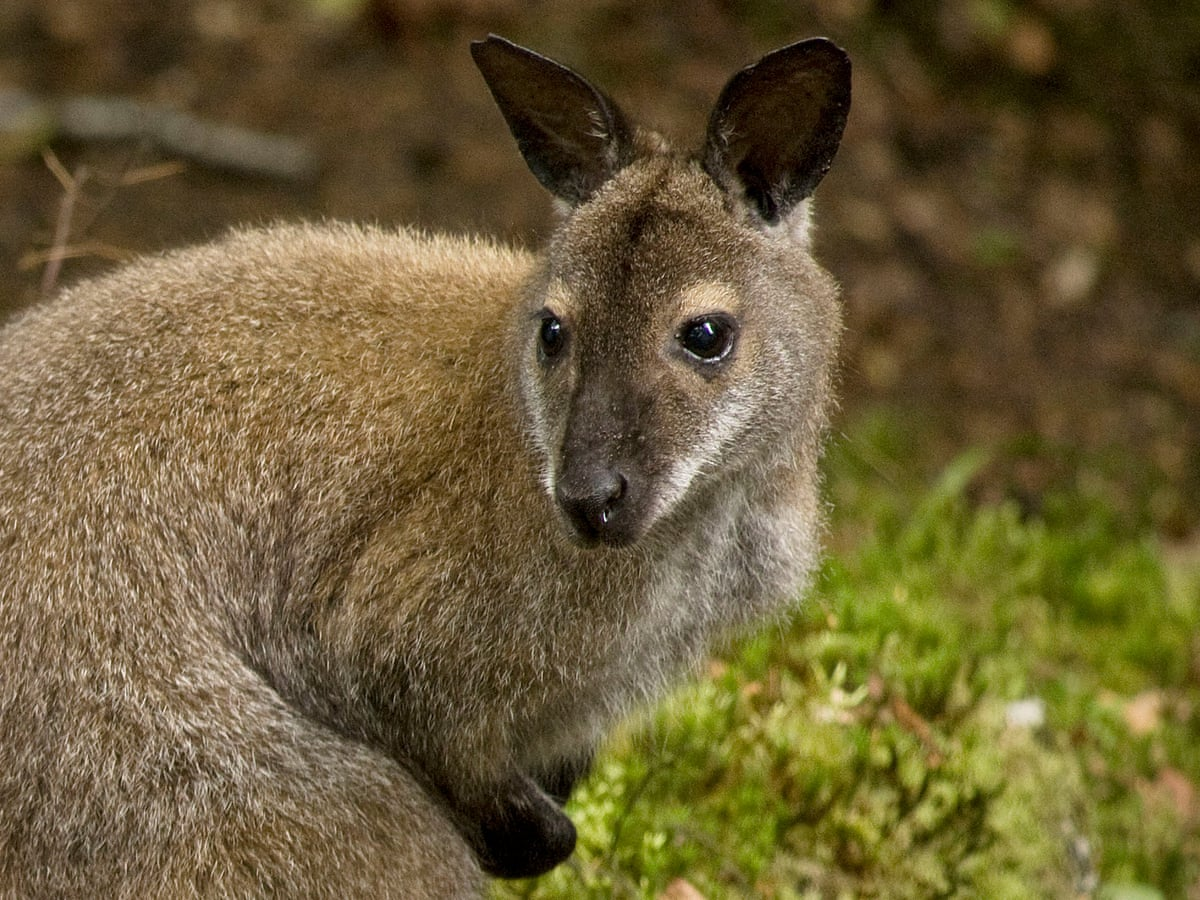For Sale Loch Lomond Island With Great Views And Feral Wallabies Uk News The Guardian